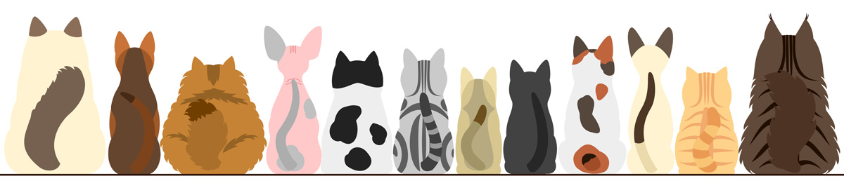 Zecchino d'oro 44 gatti
