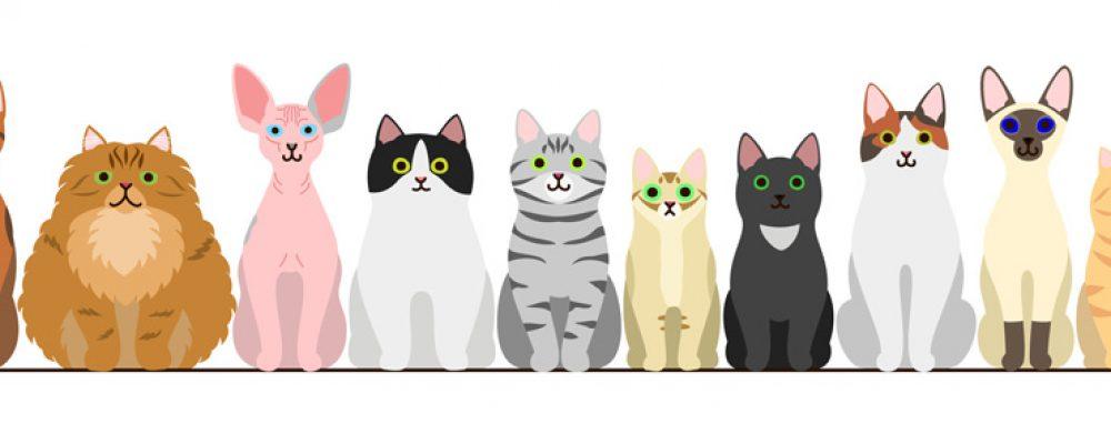 44 gatti | Quarantaquattro gatti testo e video